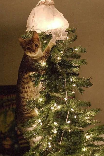 Helping with the christmas decorations.