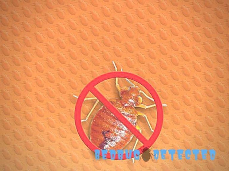 How long can bed bugs live without feeding bugs longer bed