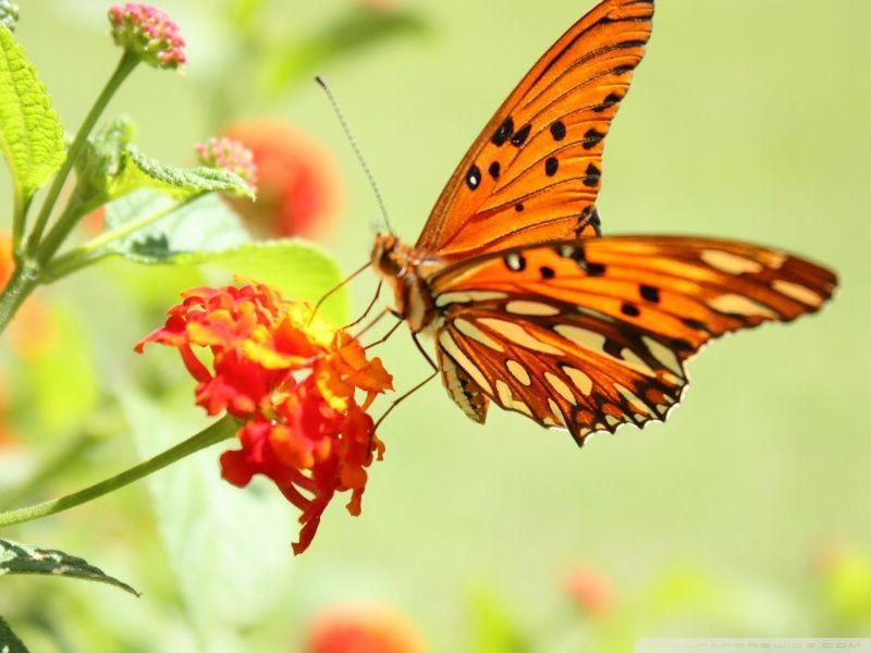 صور أشكال فراشات ملونه وجميلة ميكساتك Animals Moth Bee