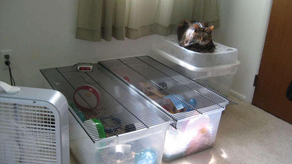 Easy Bin Cage For Hamsters Using Rubbermaid Tightmesh Wire Shelving