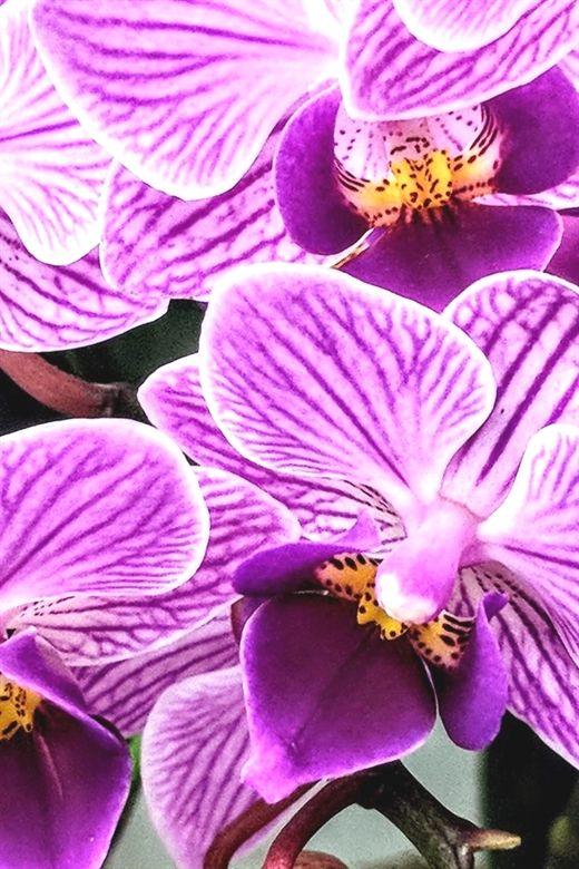islamic home decor 403 20181004040854 62 spring home decor trends rh pinterest com  spring summer 2018 home decor trends
