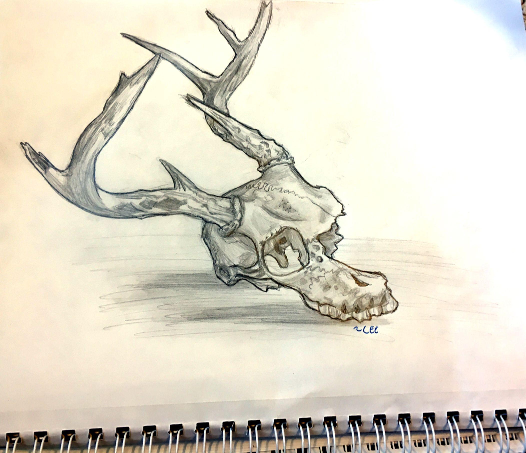 Deer skull that my dad found in the woods my drawings