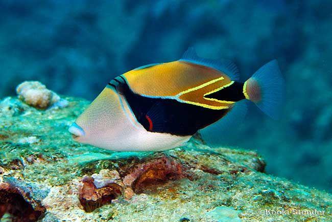 Pin By Alison Piscitello On Beautiful Animals Marine Fish Marine Fish Tanks Animals