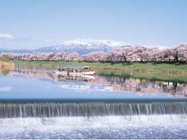 Cherry-blossom viewing pleasure boat. Looking for more information aboout Miyagi? Go Visit Ogawara-machi sightseeing product. http://oogawara.com/sakura.html