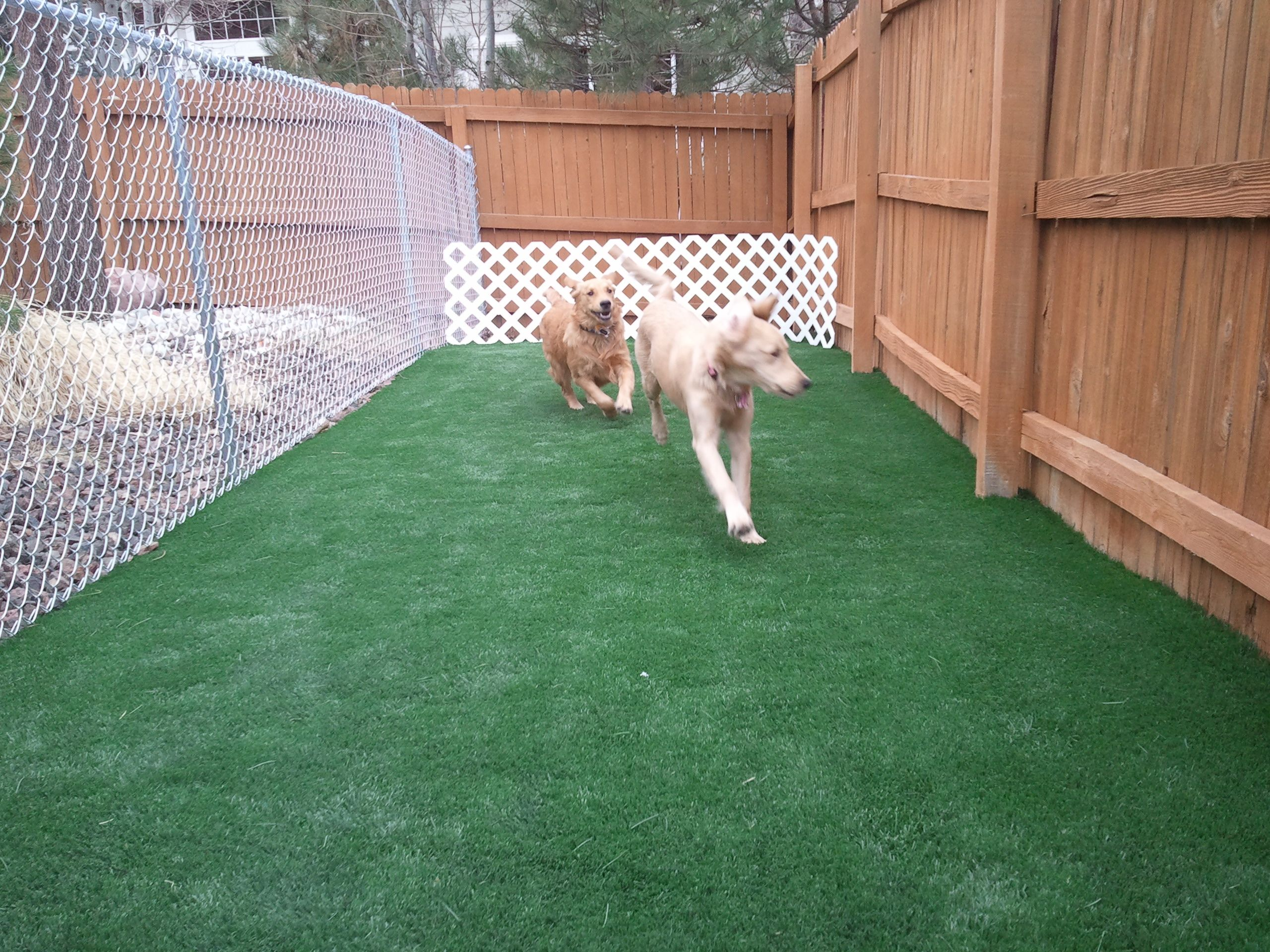 Dog Run Idea Fake Gr Costco Parion Off Yard And Make Shade Cover Rock Along Fence Line On Right