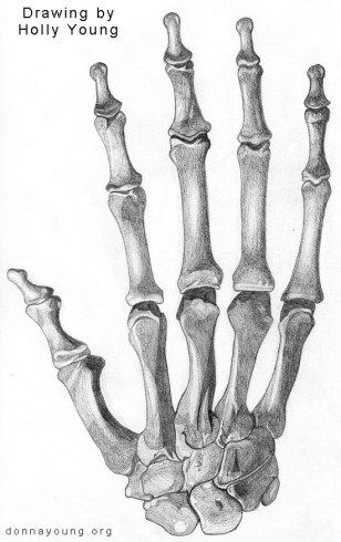 donnayoung.com art - skeleton hand by Holly | Homeschool ...