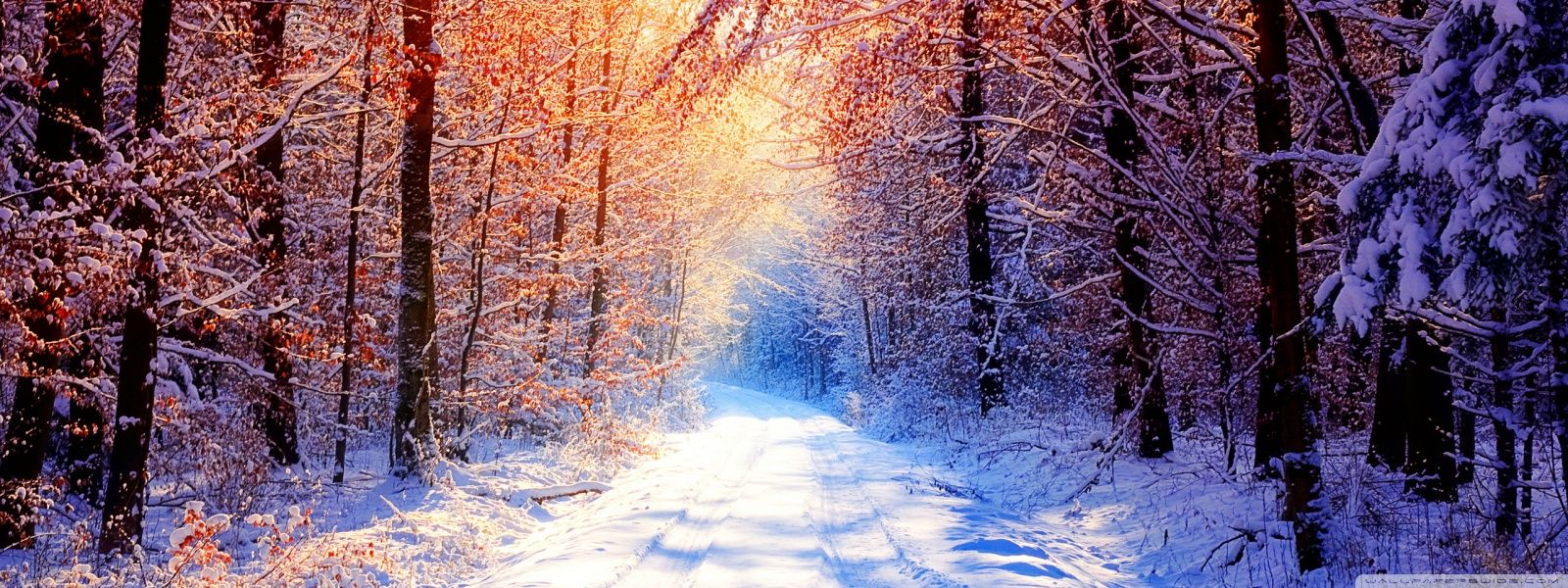 Winter Widescreen Wallpaper Wide Is Cool Wallpapers Winter Wallpaper Screen Wallpaper Widescreen Wallpaper