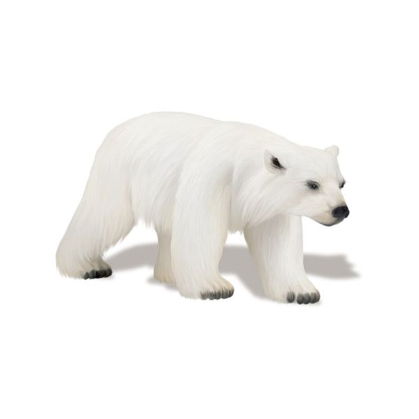 Косметика tianDe — «sussieM North Pole Trip IL EP45 sh.PNG» на... ❤ liked on Polyvore featuring animals, winter, polar bears, snow and white