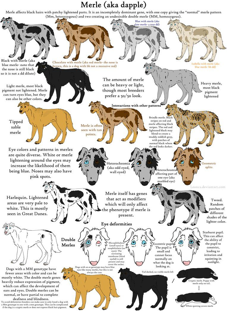 Dog Colors Guide Merle by Leonca on deviantART