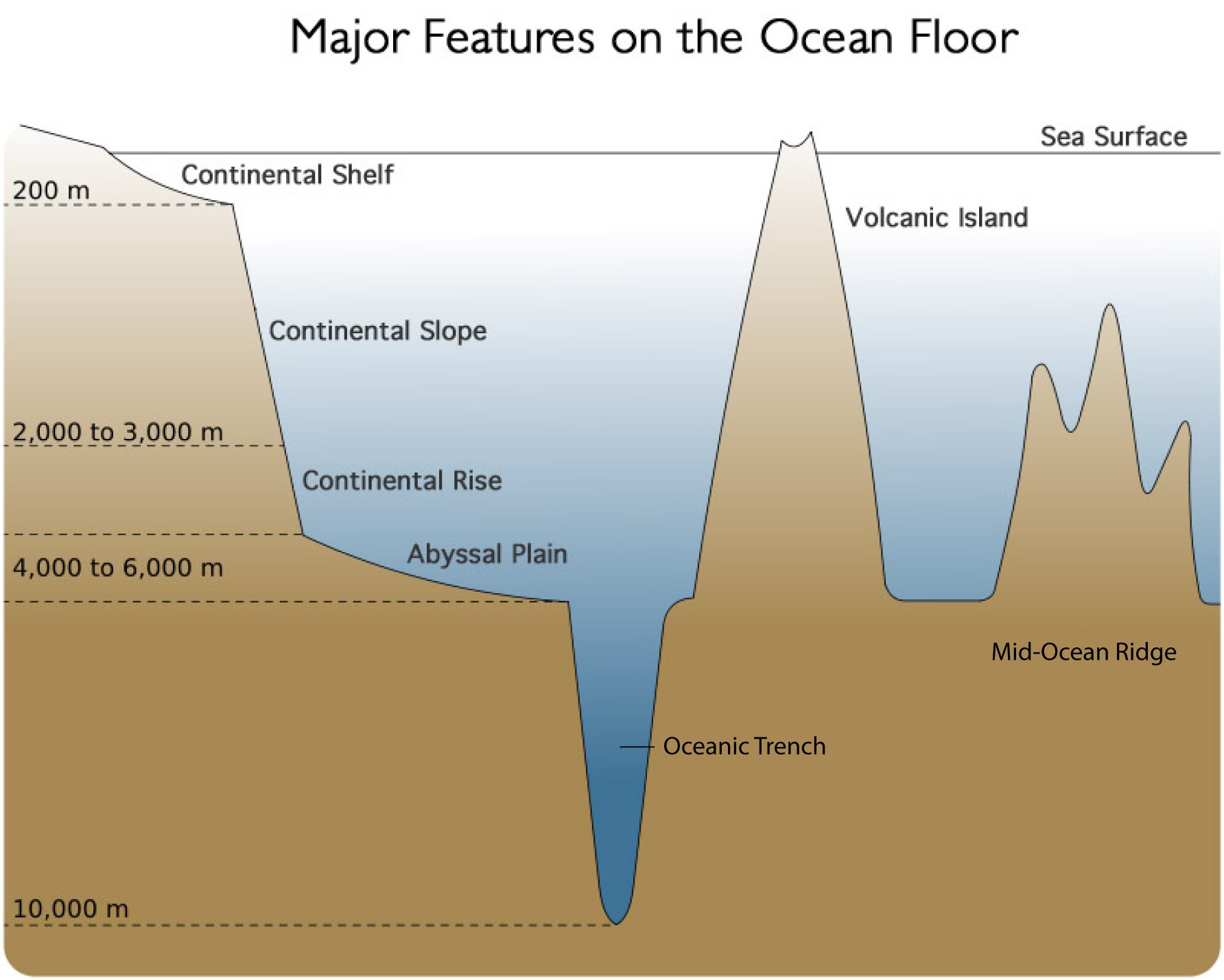 Diagram of Ocean Floor 3D | Ocean Floor Diagram | Ocean ...