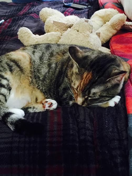 Anastasia taking a nap next to a teddy bear.