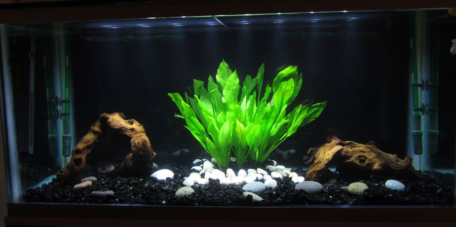 Similiar Black Background With Fish Tank Rocks Keywords Fish Tank Black Backgrounds Black Tank