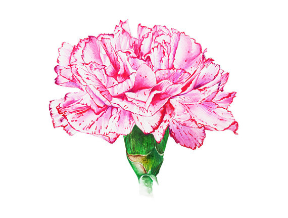 Pink Carnation Botanical Art Watercolor Painting Floral Design Watercolor Print Home Decor Wall Art Flower Art Drawing Flower Art Floral Painting