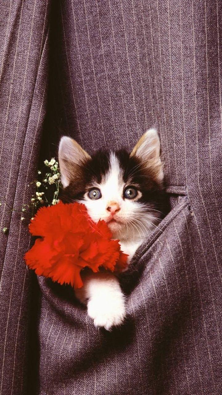 Jacket Cat