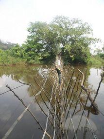 Boali-Bridge Over The River. Central African Republic