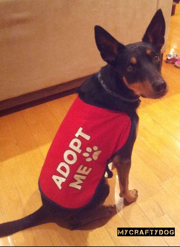 Medium size Adopt Me Jacket for Rescue Dogs. https//www