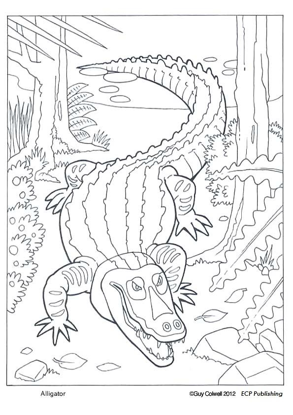 Alligator Coloring Pages Animal Coloring Pages Cute Coloring Pages