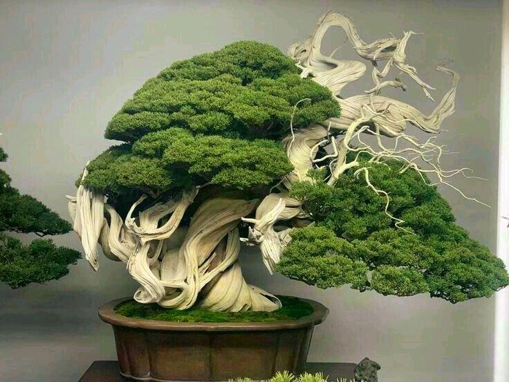 Board: Bonsai | Terrariums #bonsai #bonsaitree #bonsaiart #bonsailovers #bonsais #bonsaigarden #terrariums #terrariumsofinstagram