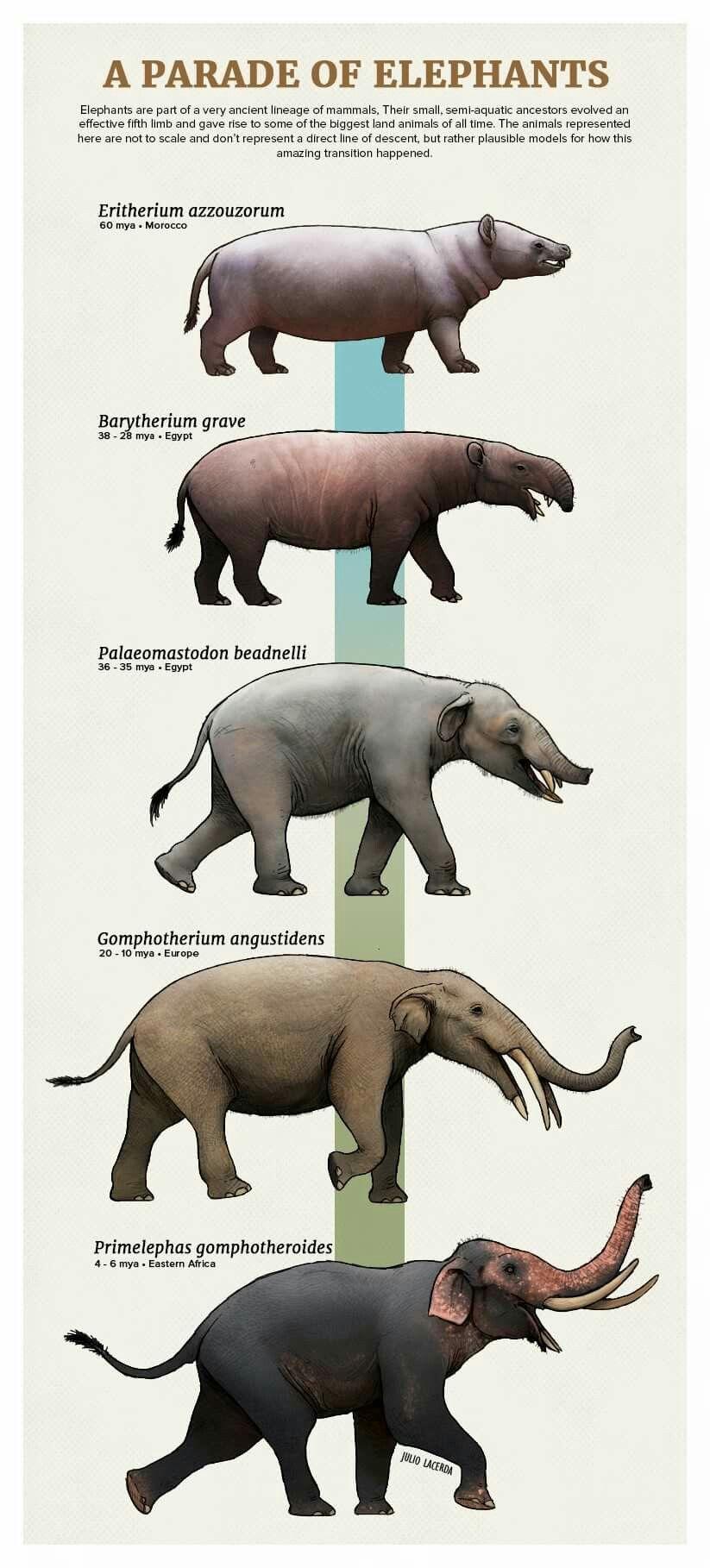 Exemplo de elefantes do continente. #prehistoricanimals