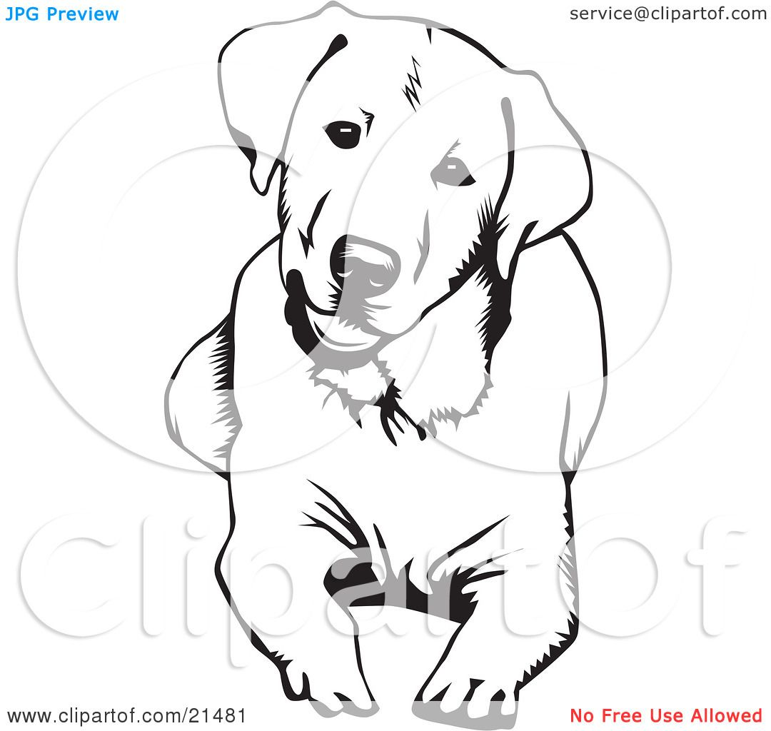 Clipart Illustration Of A Cute And Curious Labrador Retriever Dog Labrador Retriever Hund Zeichnungen Retriever Hund