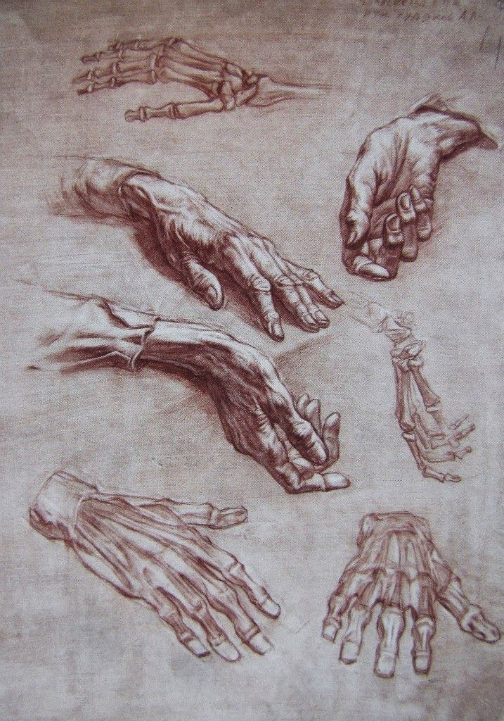 MAGDA VACARIU | LIFE DRAWING AND ARTISTIC ANATOMY | Pinterest | Hand ...