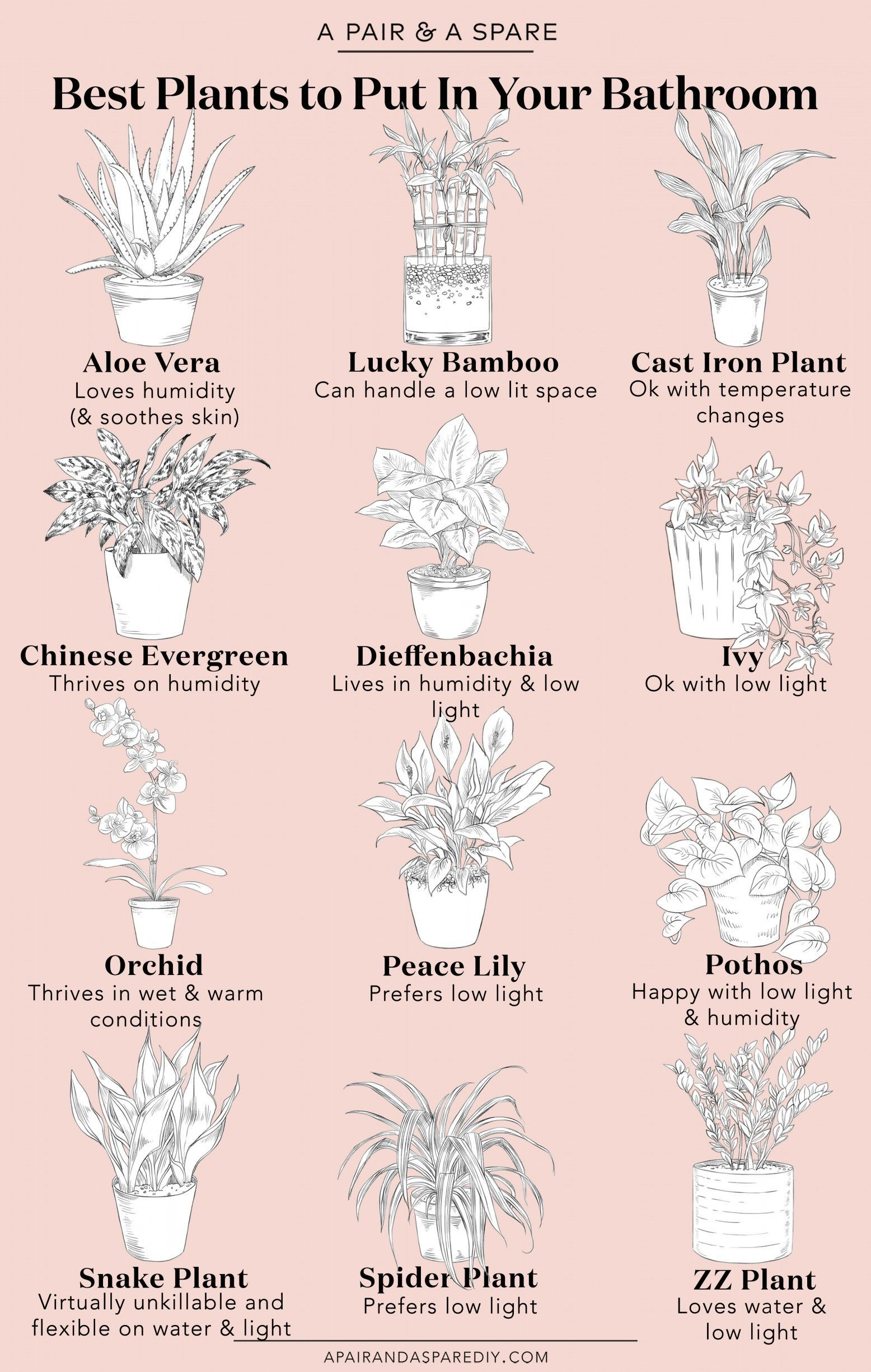 Photo of A Guide To The Best Plants For Your Bathroom | Collective Gen #astronomy #bathro…