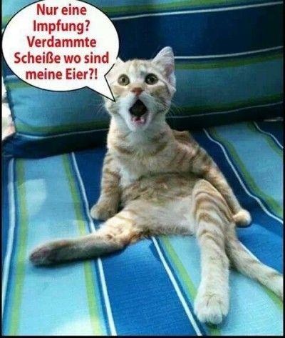 Bilder Katzen Lustig