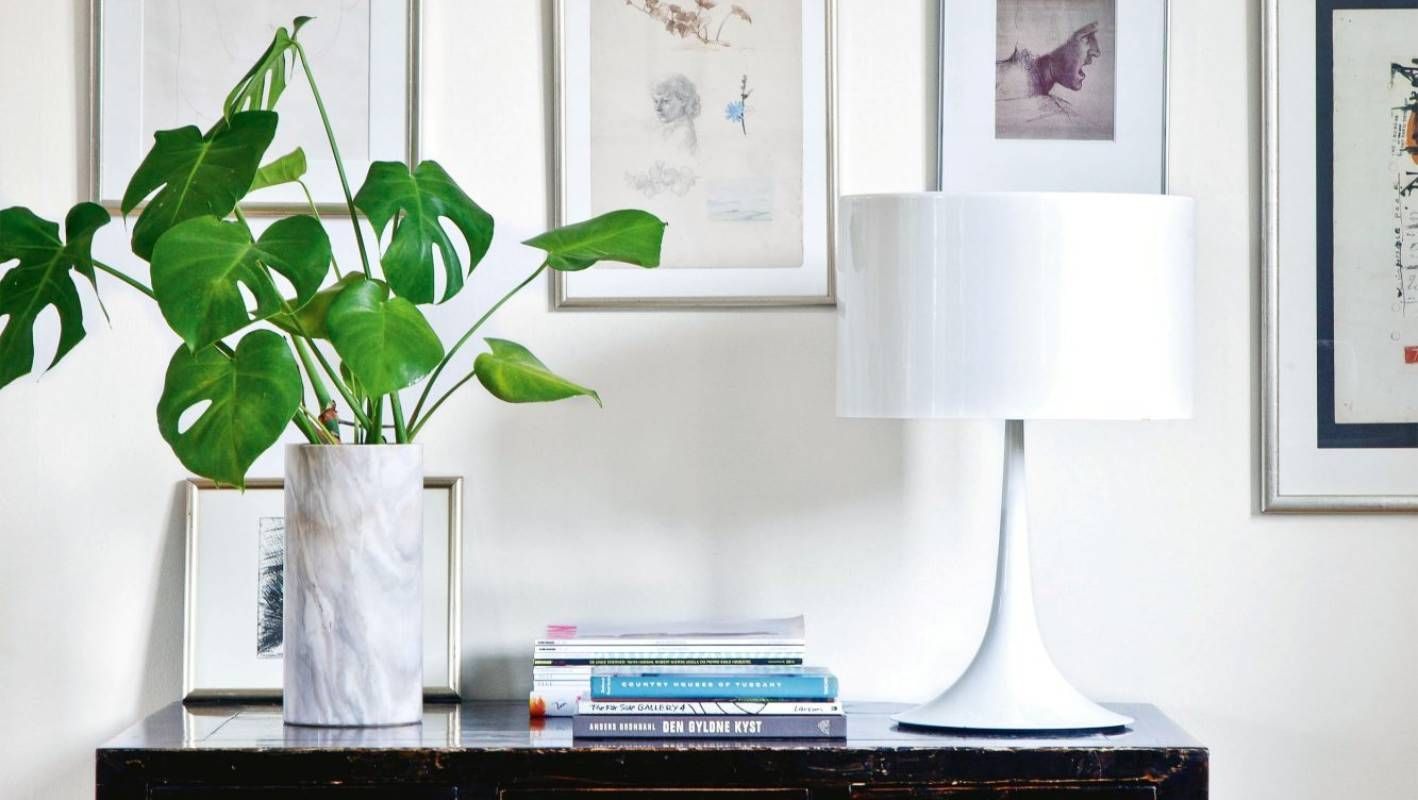 There's a jungle in there Houseplants now reign supreme
