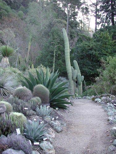 Reasons To Visit Uc Berkeley S Botanical Garden Landscaping