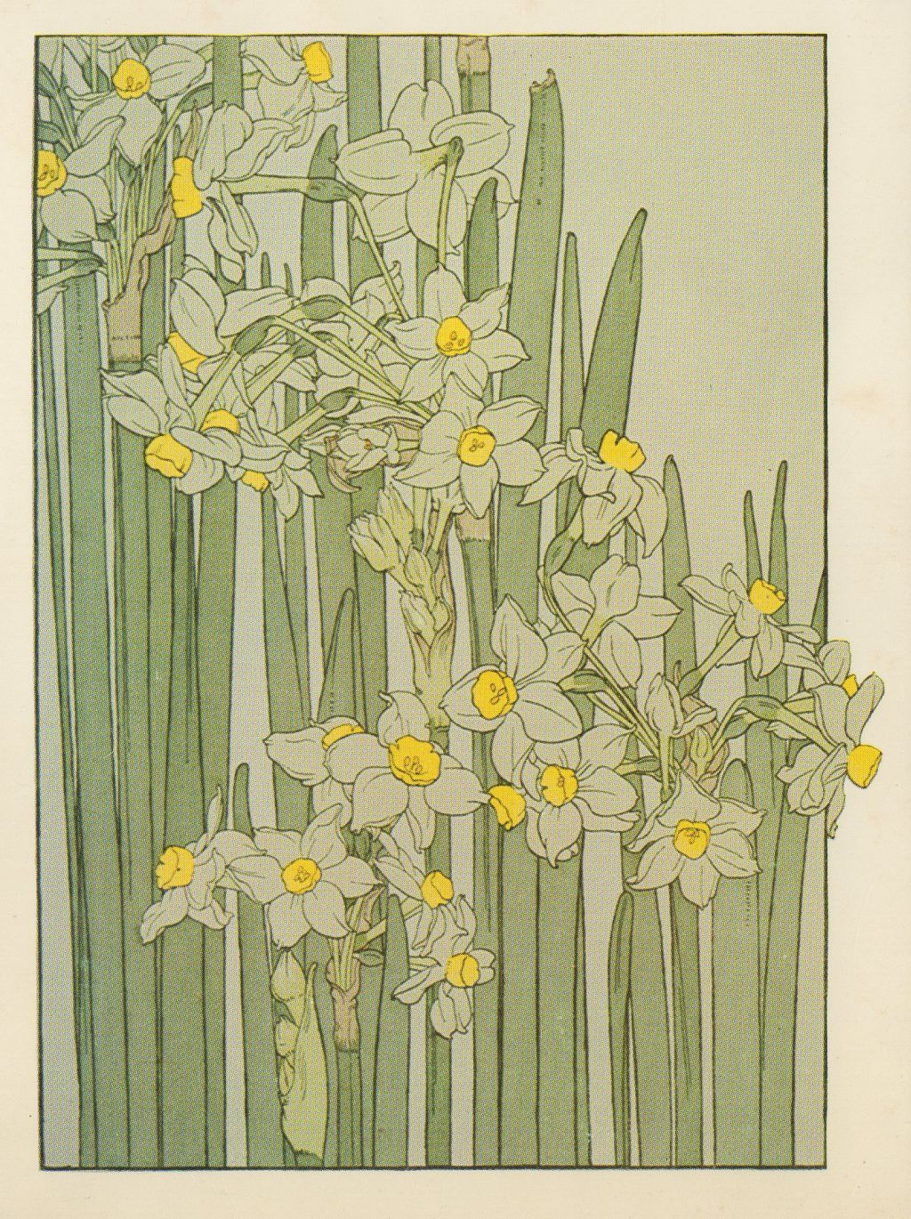 Art Deco Nouveau: Narcissus Flower Study In The Art Nouveau Style Artist