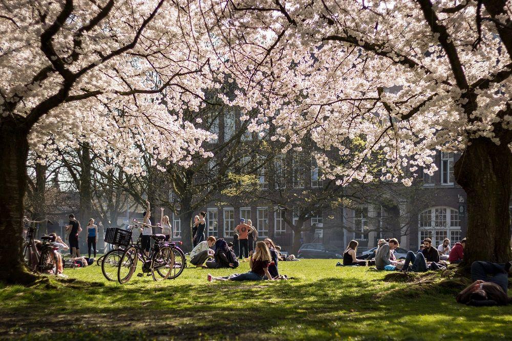 Frühling in Maastricht, unter den blühenden Bäumen, Spring in Maastricht Netherlands, flowers, Bloom, trees  Picture by Georg Mayr Photography