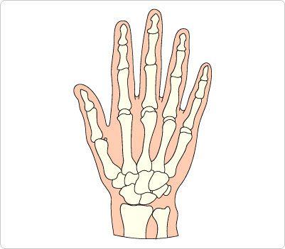 Bones Hand Clip Art | Human Body Clip Art | Pinterest | Clip art