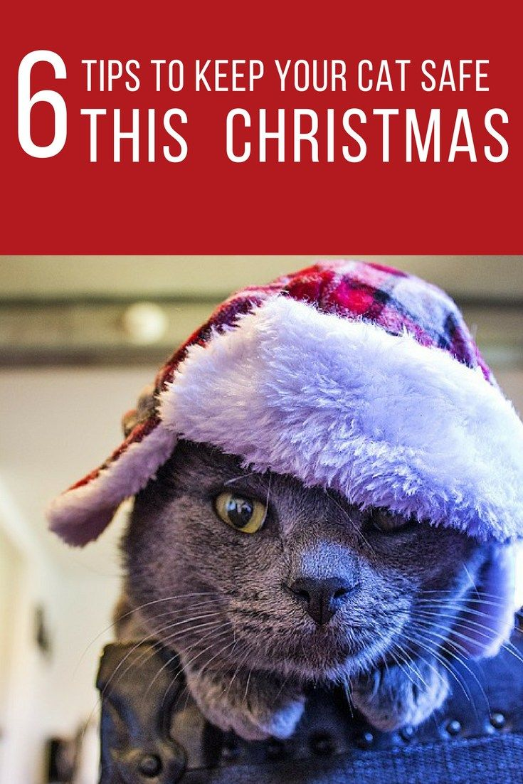 How to keep your cat safe during the holidays cats best