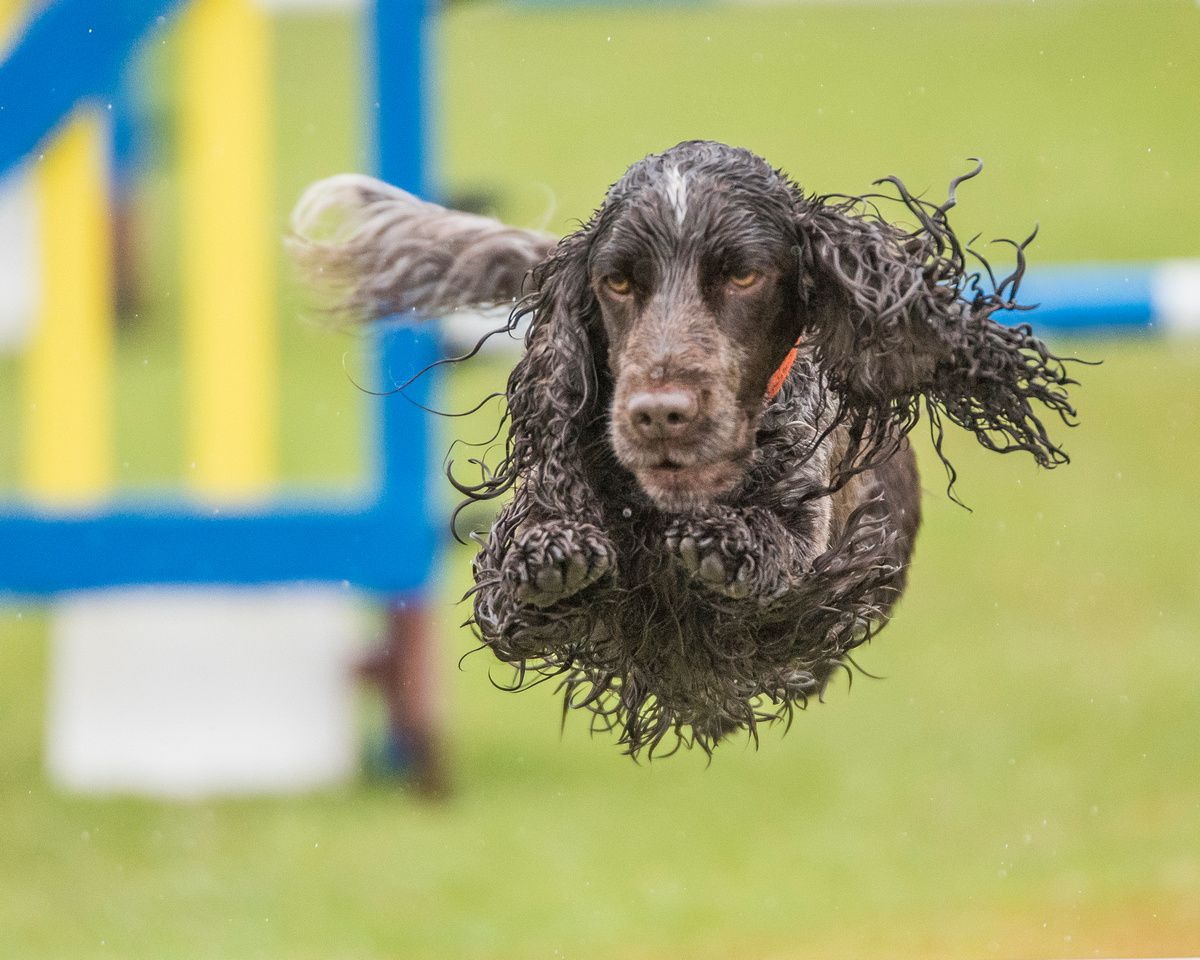 Told you it was a wet one. My Charlie doing his stuff