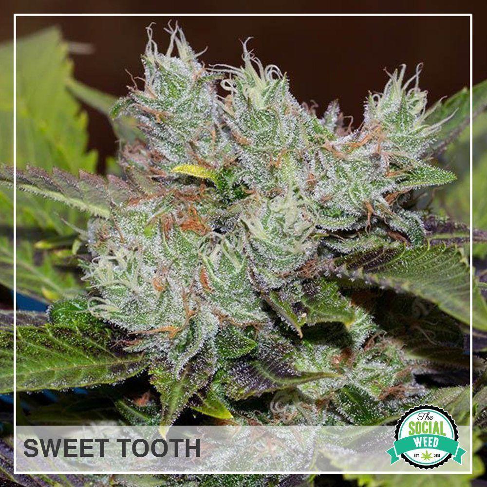 Sweet Tooth Sweet tooth, Sweet, Teeth