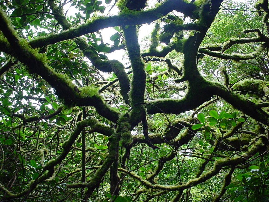 Tangled Trees Google Search Tangled Plants Tree