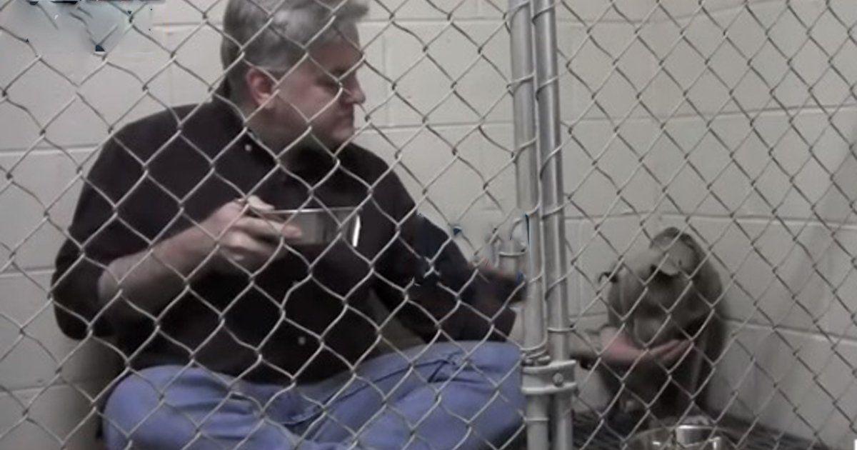 Necesitamos que todos los refugios cuenten con veterinarios! FIRMA Y COMPARTE ESTA PETICIÓN AHORA!