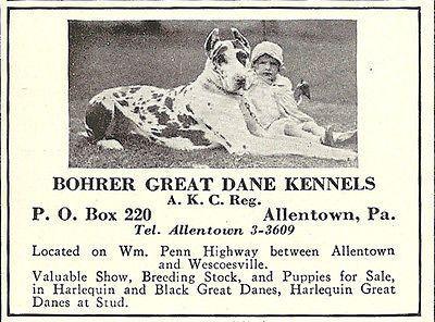 Great Dane Bohrer Kennels Allentown Pa 1933 Dog Photo Ad Dog Great Dane Kennels Great Dane Black Great Danes