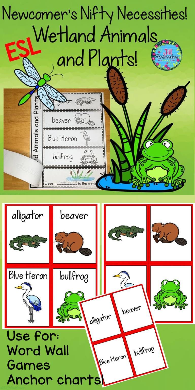 Have Fun Using This Wetland Animals Resource This Vocabulary Resource Can Be Used In A Varie Ell Activities English Language Learners Activities Ell Resources [ 1536 x 768 Pixel ]