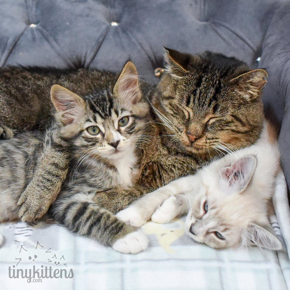 Rescue Group Begs for Foster Kittens For Their Lonely