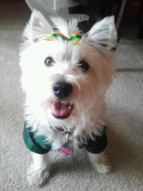 My Penny! Go Pack Go! # Westie
