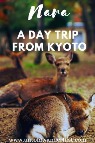 CLICK HERE for the ultimate day trip to Nara guide. Find out how to get there, all about feeding the deer, the most impressive shrines & more! #asiatravel #japantravel #narajapan #naraitinerary #untoldwanderlust