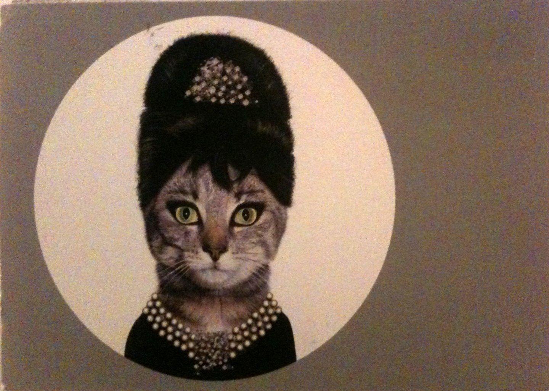 nice cat postcard