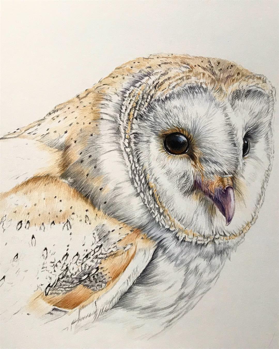More owl #barnowl #bird #drawing #coloredpencil # ...
