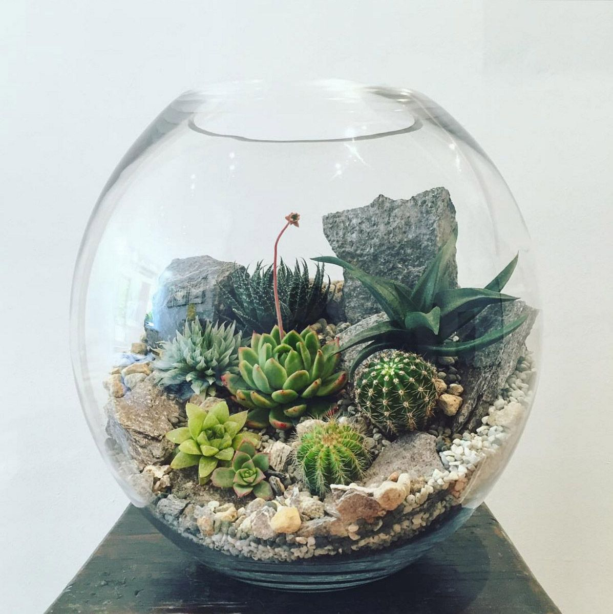 desert world terrarium extra large plantes jardins et. Black Bedroom Furniture Sets. Home Design Ideas