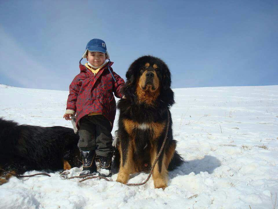 Banhar...Mongolia dog and kid
