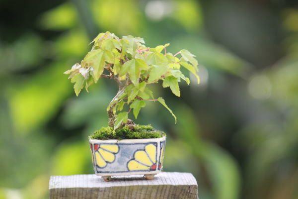 ちょっと困っています |超ミニ盆栽のブログ