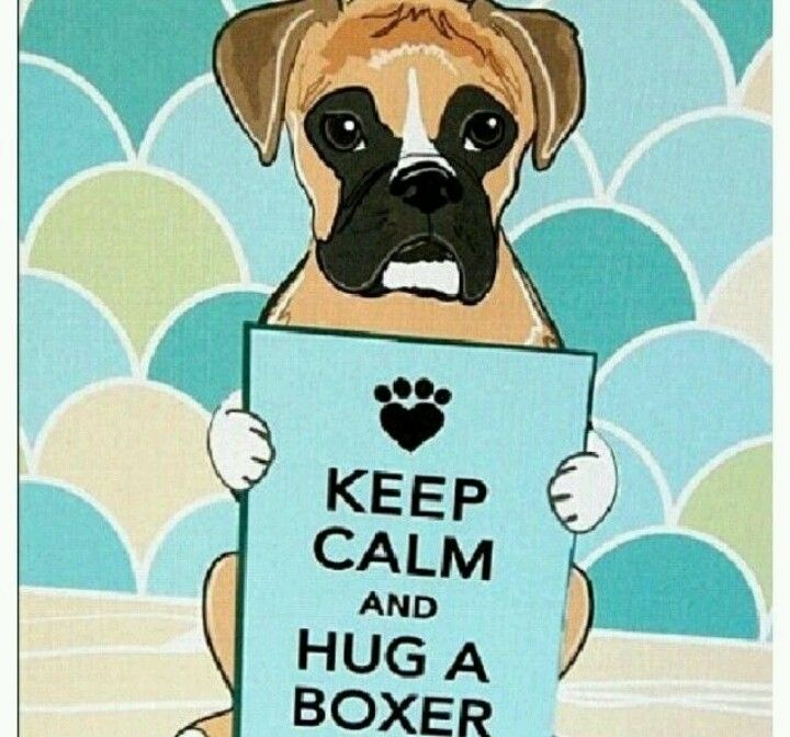 With Pleasure Boxer Dog Quotes Boxer And Baby Boxer Dogs