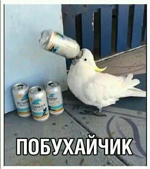 Natalya отправляет вам пин.