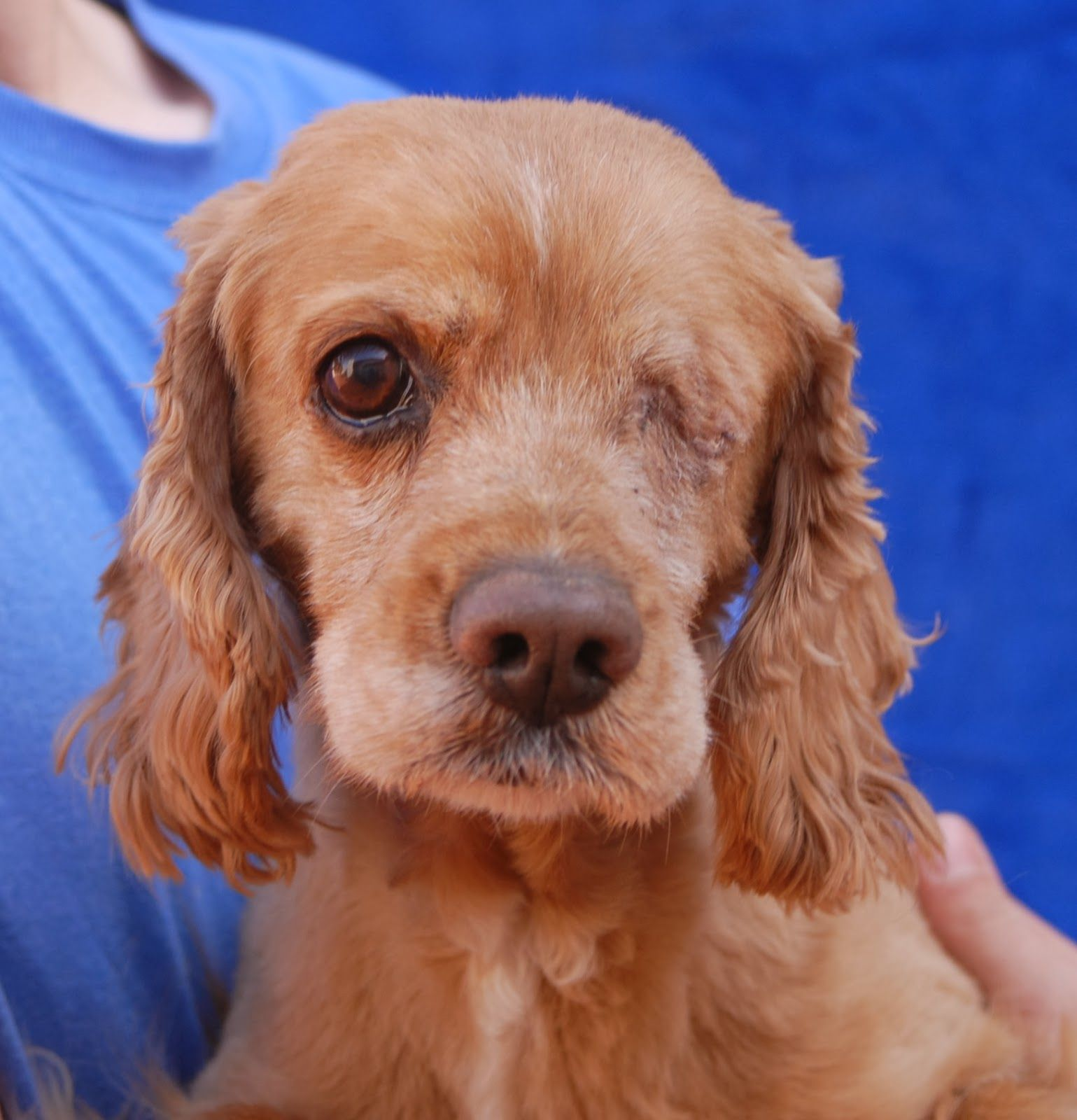 Bailey A Rescued Cocker Spaniel Ready To Begin His New Life Animals Dog Adoption Pets